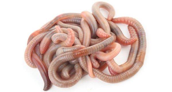 к чему снятся черви в теле человека